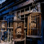 Owls hanging in cages at Diagon Alley