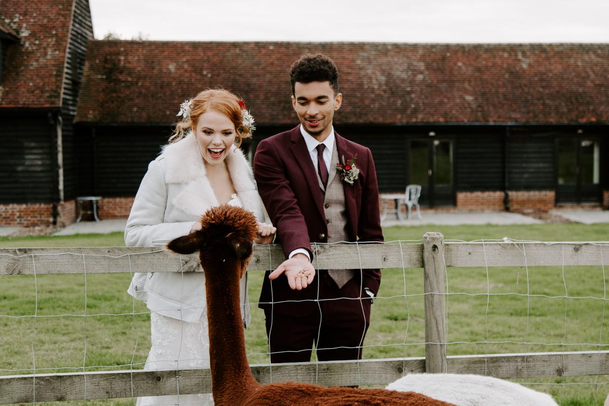 Coltsfoot wedding venue wedding portraits with alpacas